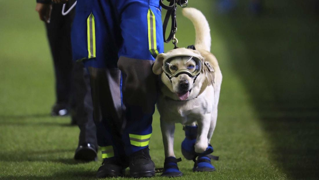 Frida the rescue dog.