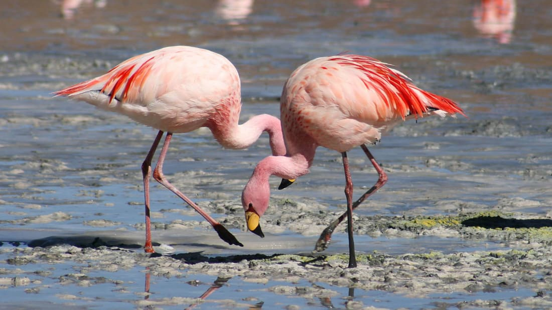 We get angry red acne; flamingos get beautiful pink plumage.