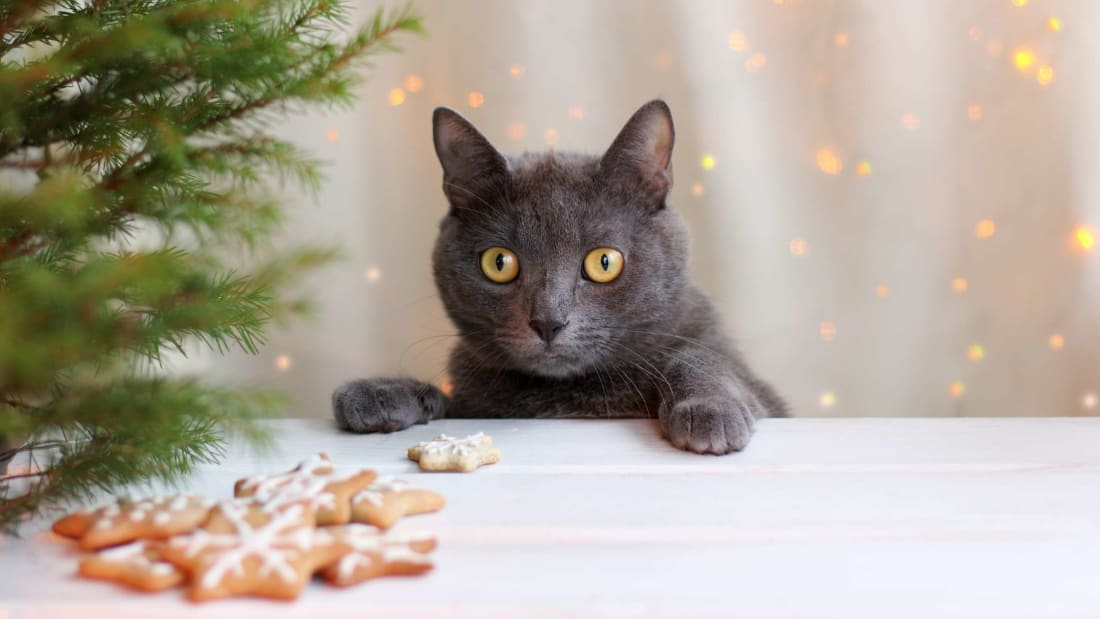 Trader Joe's Is Selling an Advent Calendar for Cats