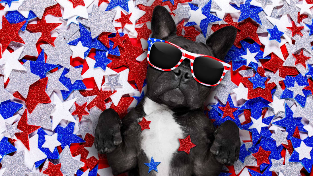 May all dogs be this chill on the Fourth of July.