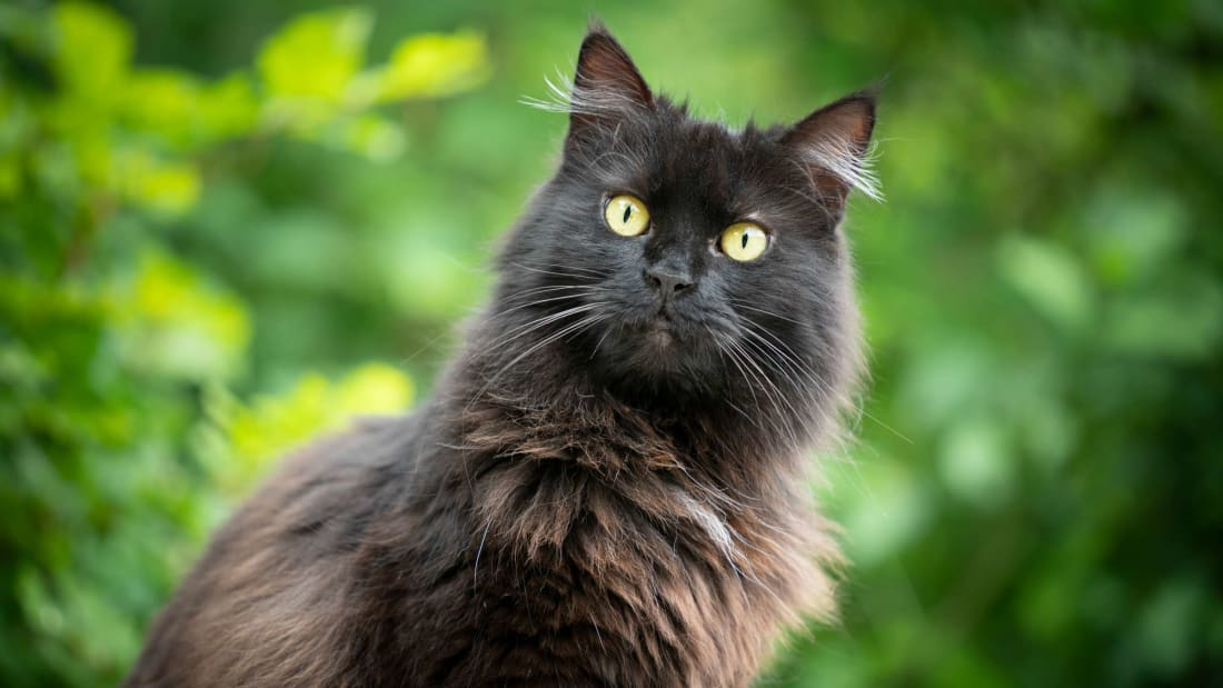 This black cat is probably wondering how anyone could think it brings bad luck.