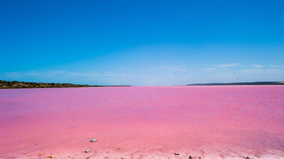 Pink waters of Lake Hillier in Australia.