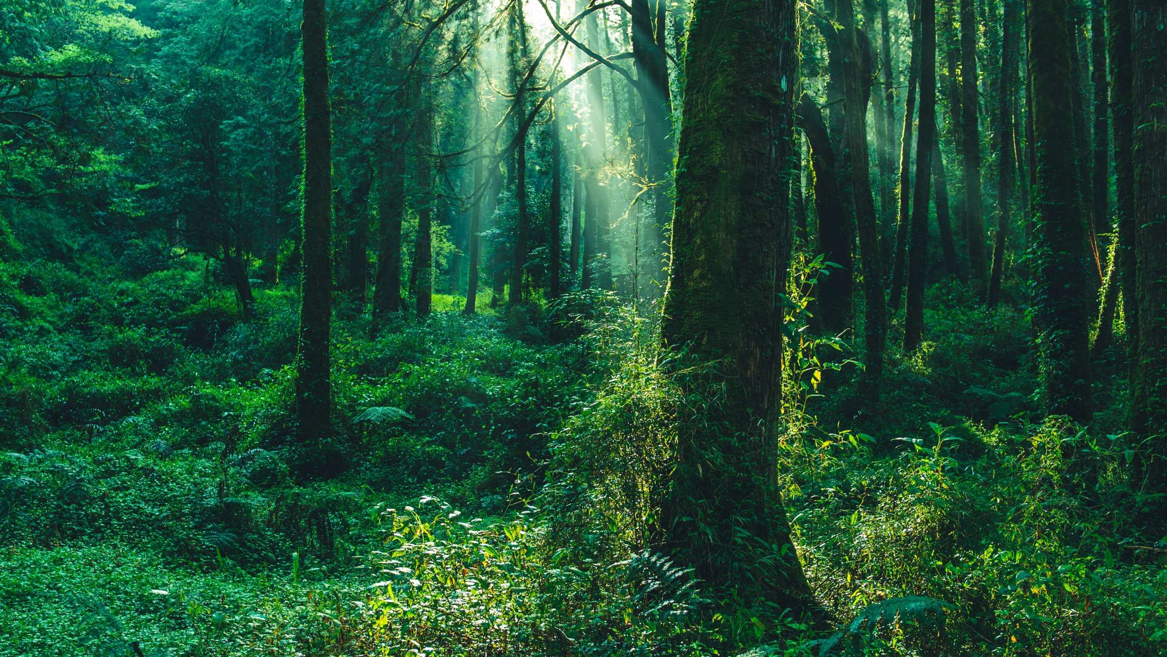 What's the Difference Between Forests, Woods, and Jungles?