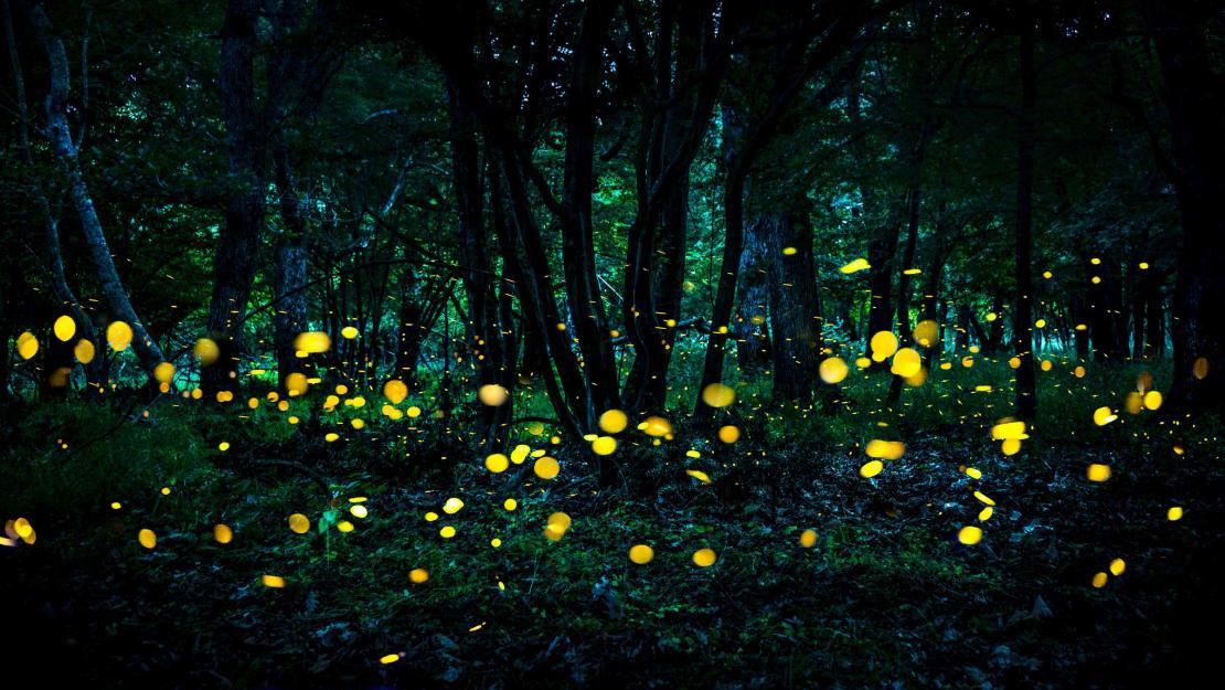Nature's light show.