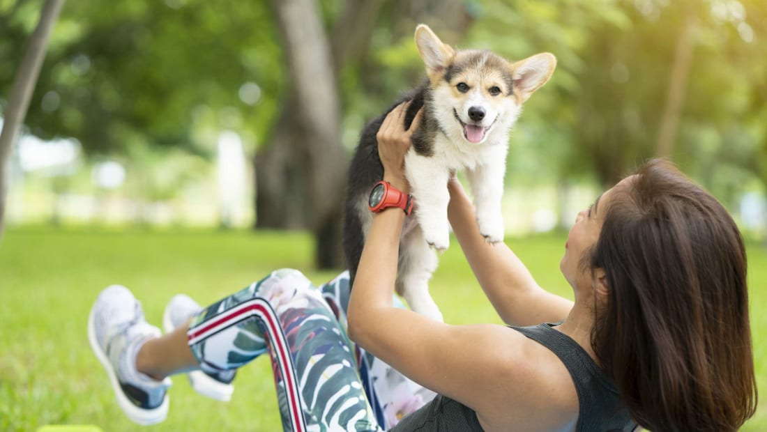 This Corgi puppy is the cuddliest dumbbell we ever did see.