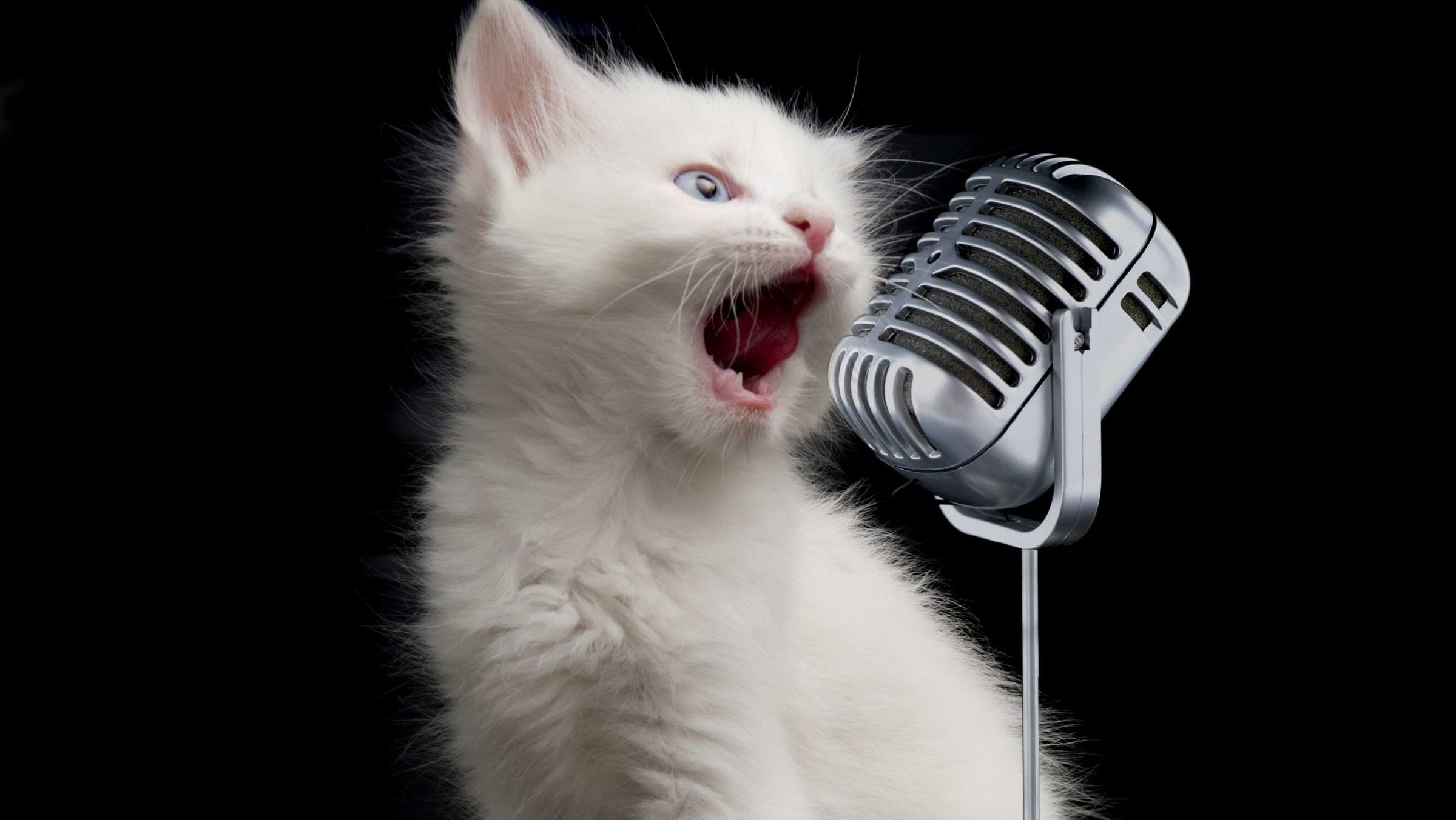 If You've Always Imagined What 'Bohemian Rhapsody' Would Sound Like If Sung By Cats, Wonder No More