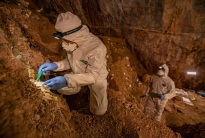 Researcher samples cave sediments for DNA.