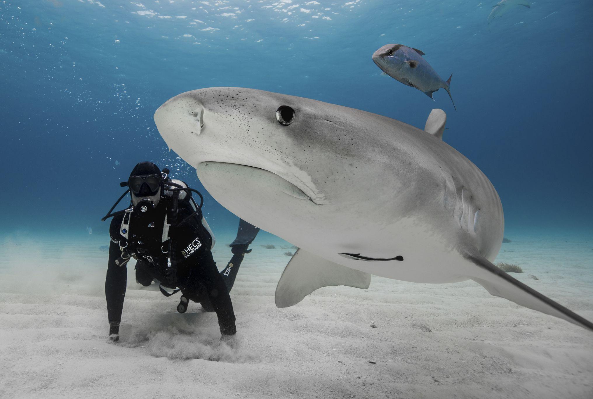 5 Expert Tips For Surviving A Shark Attack Mental Floss