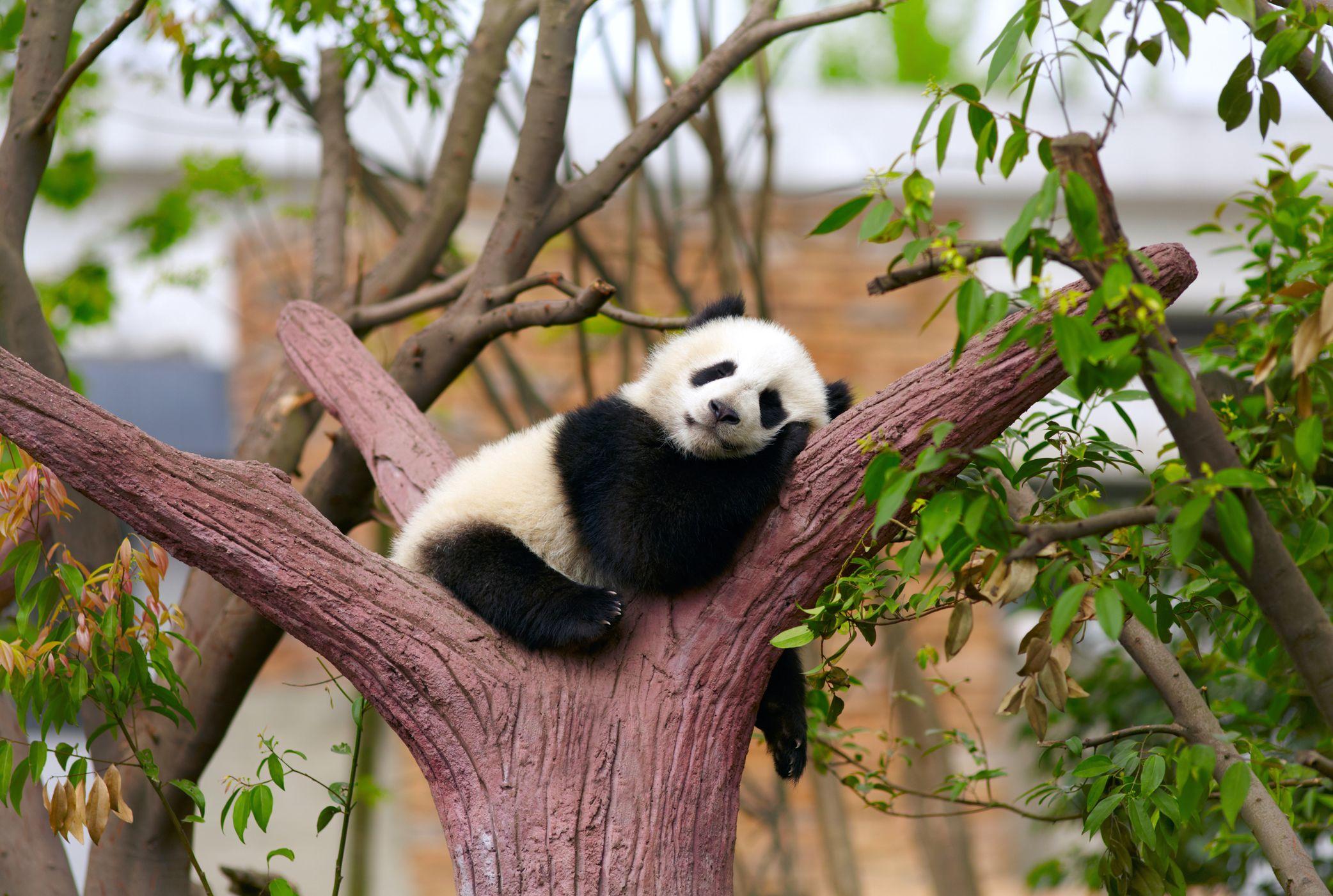 15 Amazing Sleeping Habits of Animals | Mental Floss
