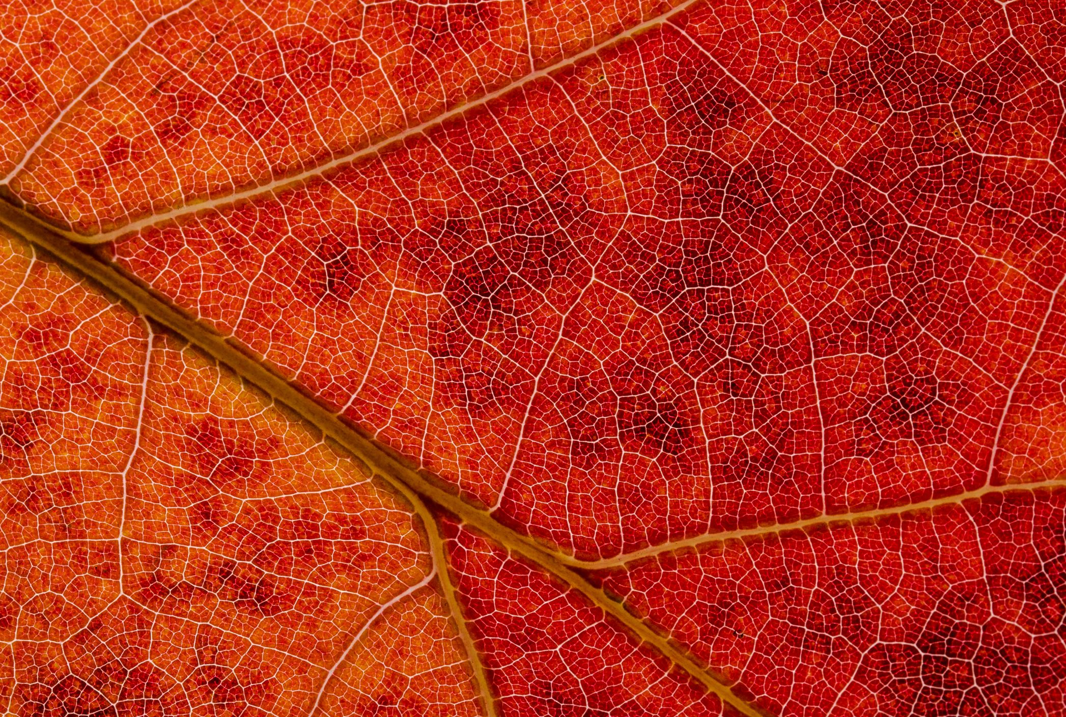 Amazing Time Lapse Shows Leaves Dramatically Changing Color During Fall Mental Floss