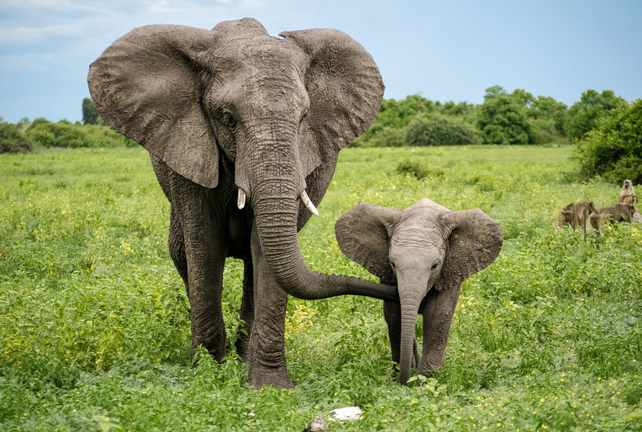 Image result for elephant image