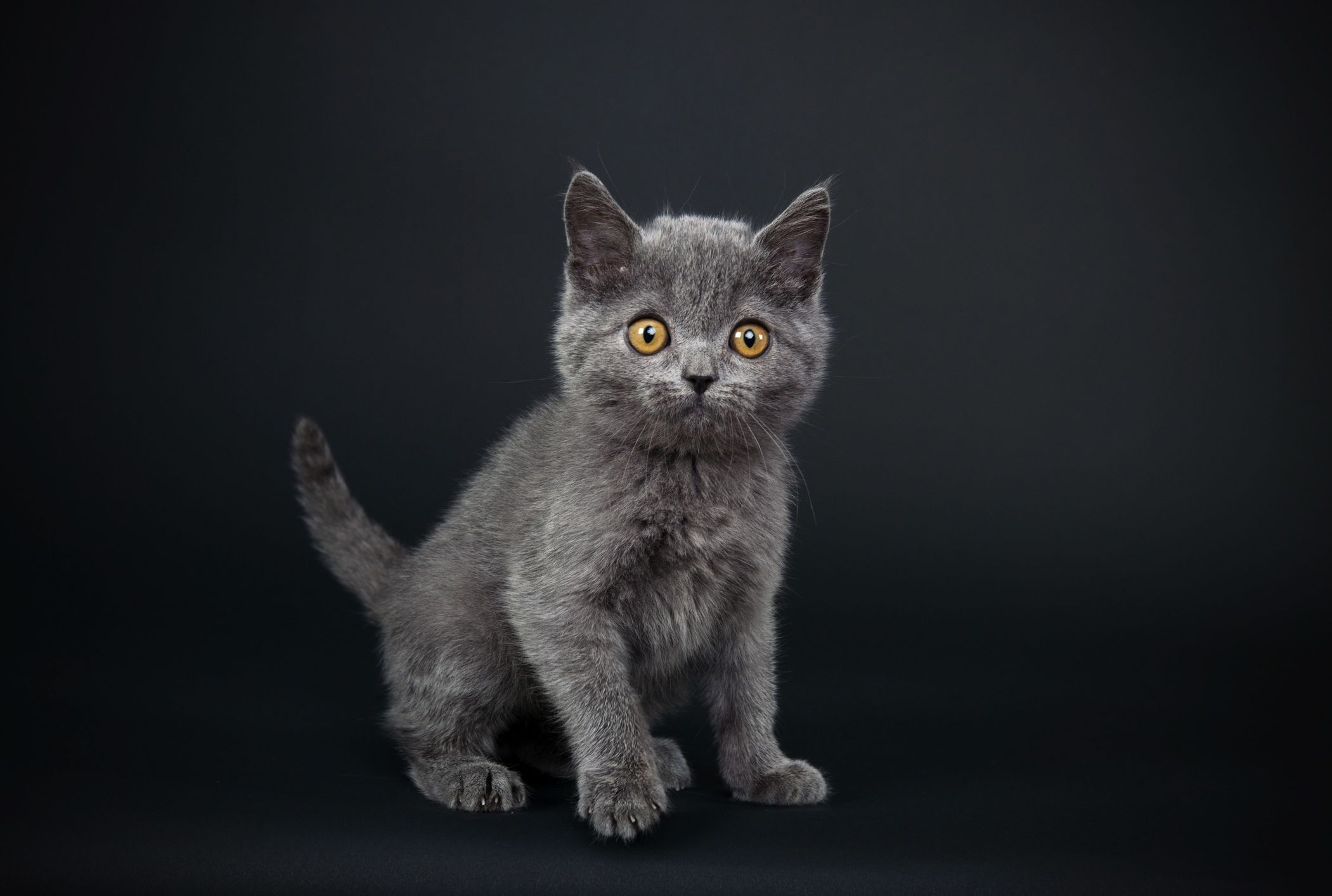 The 10 Most Popular Cat Names Of 2018 Mental Floss