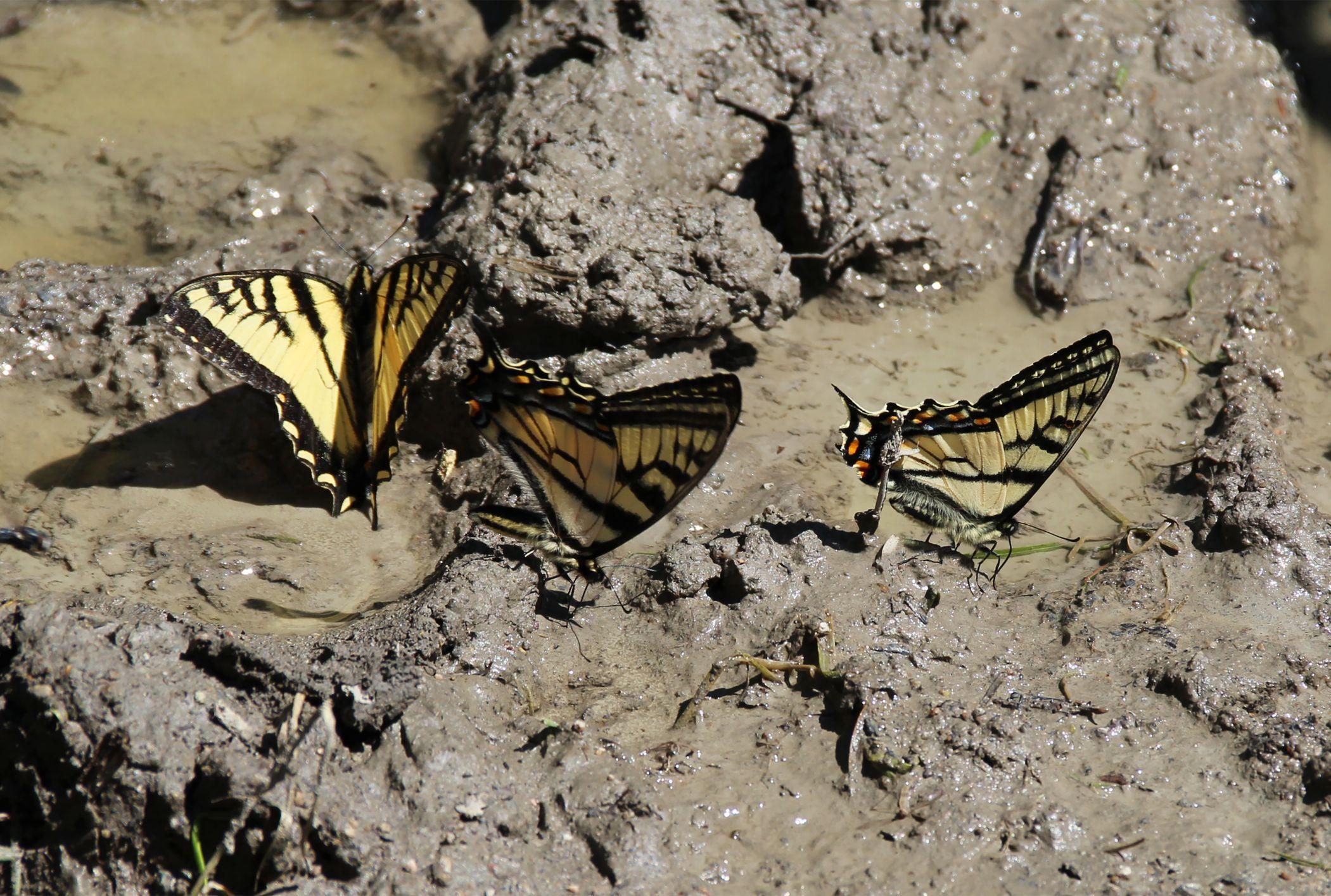 7 Disgusting Things Butterflies Eat | Mental Floss