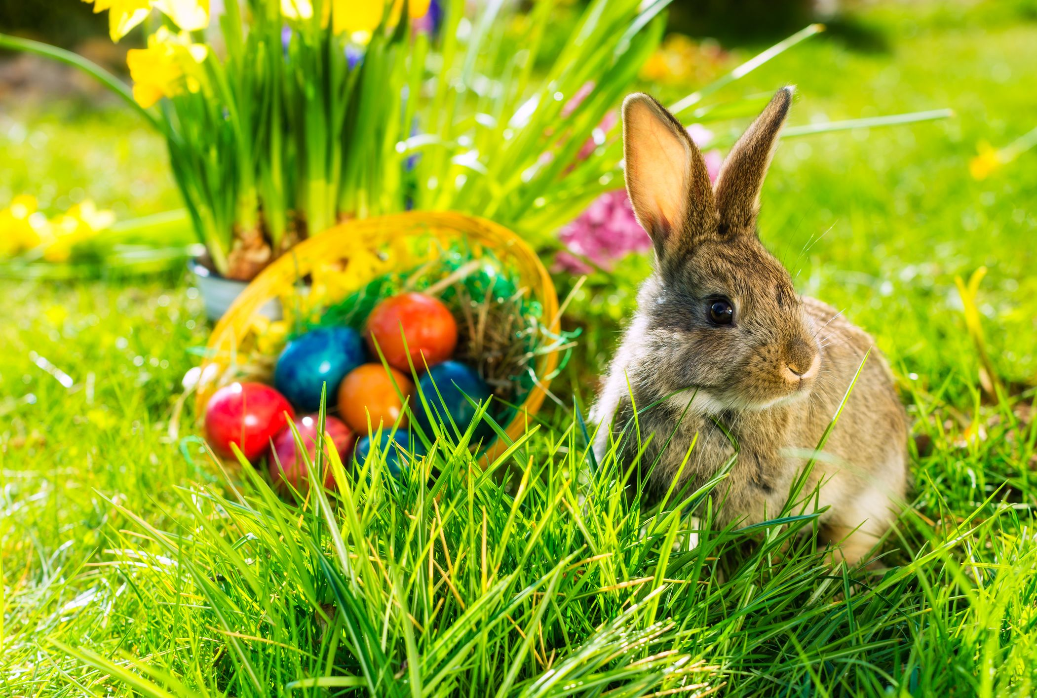 10 Things You May Not Know About The Easter Bunny Mental Floss