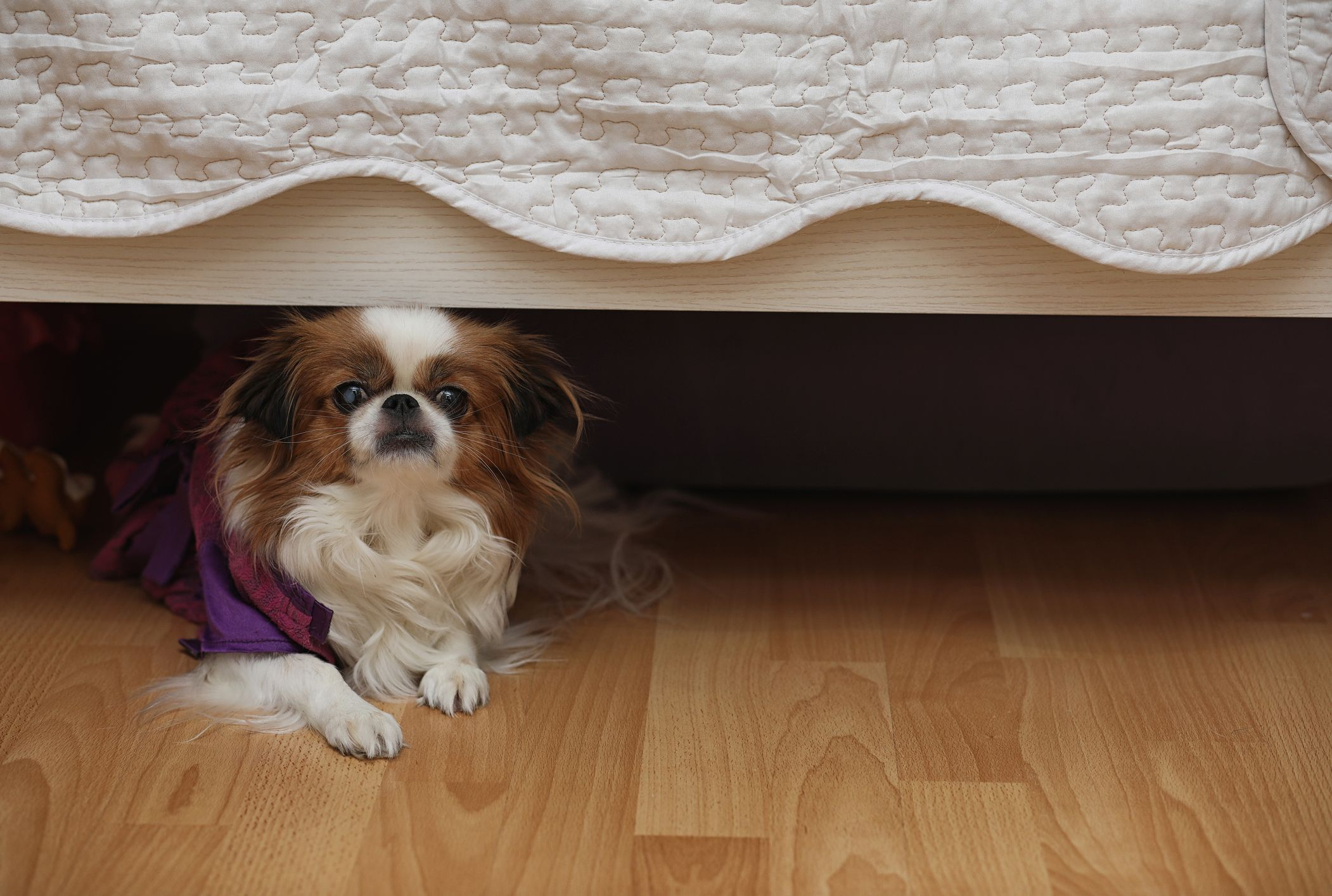 Why Do Dogs Like To Hide Under Beds Mental Floss