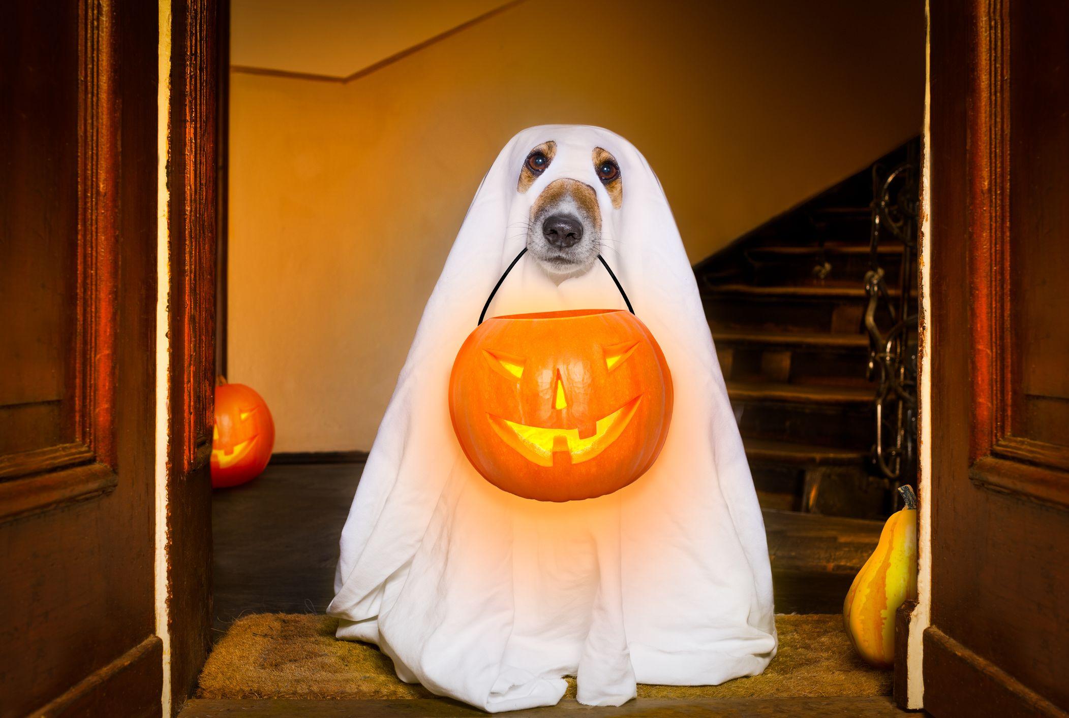 HINK Happy Halloween Party Glowing Household Children Pumpkin Decor Terror Wrist Band