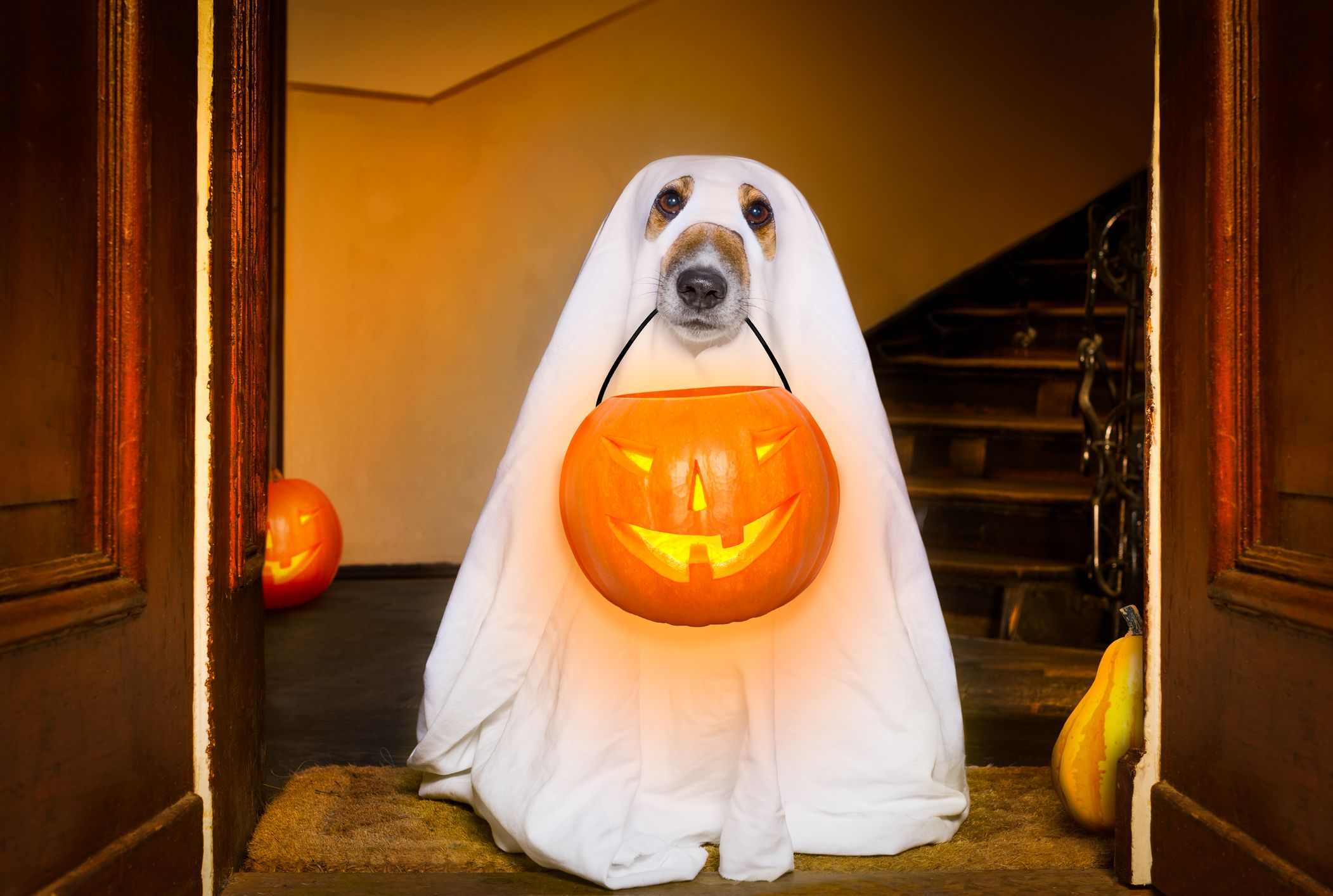 32 Awesome Halloween Decorations and Props You Can Get at
