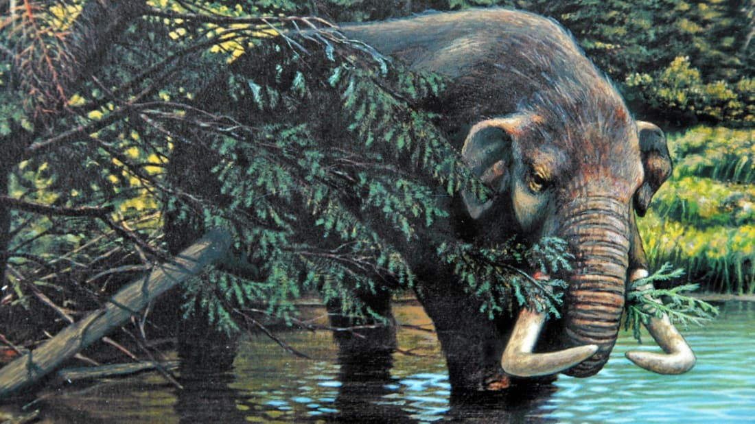 How Thomas Jefferson's Obsession With Mastodons Partly Fueled the Lewis and Clark Expedition