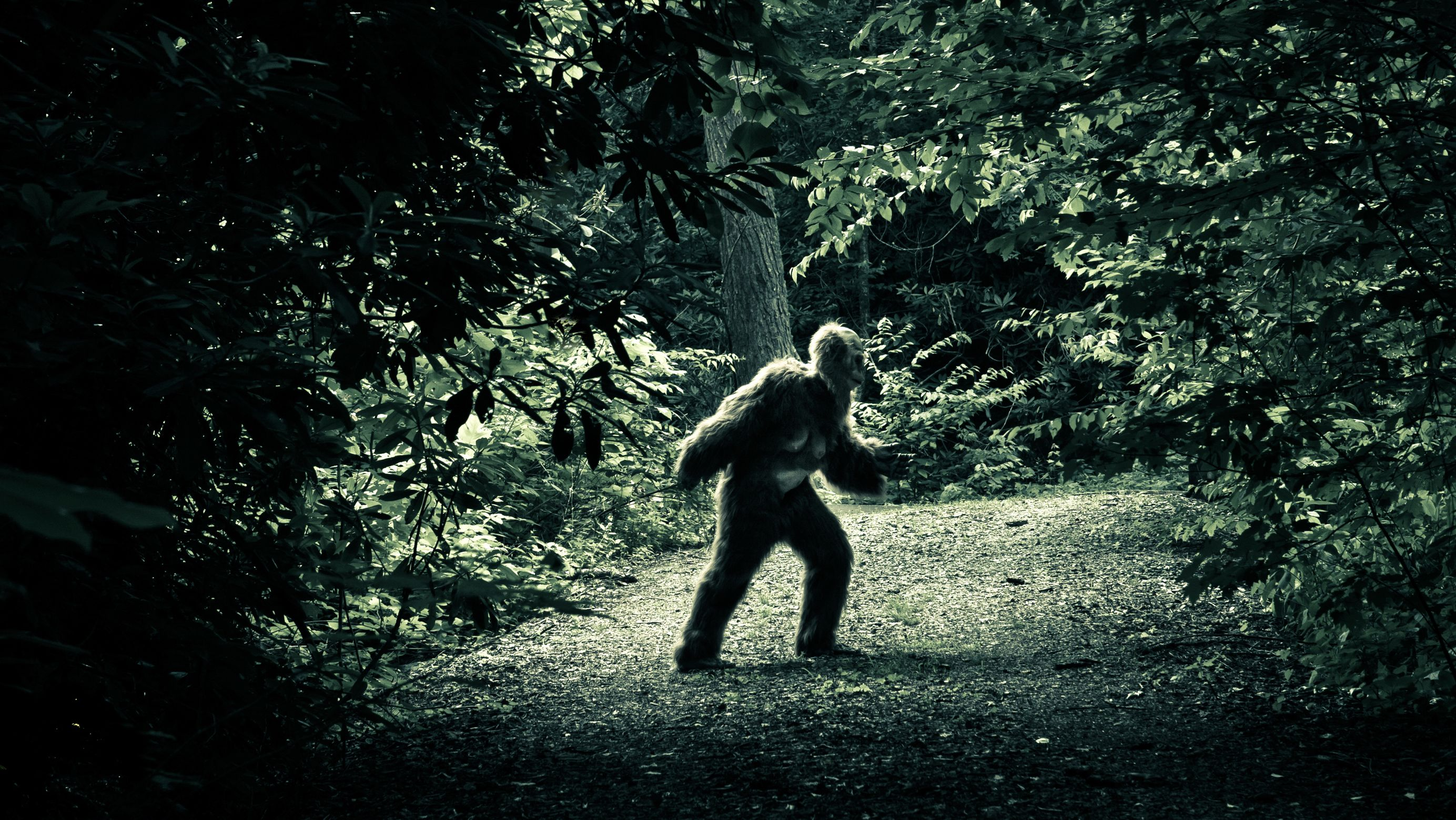 Pennsylvania Has Become a Hotbed of Bigfoot Sightings ...