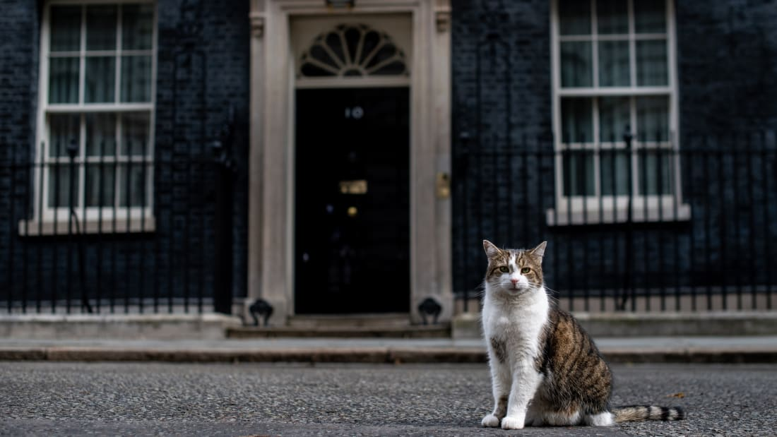 5 Facts About Larry the Cat, the UK's Chief Mouser | Mental