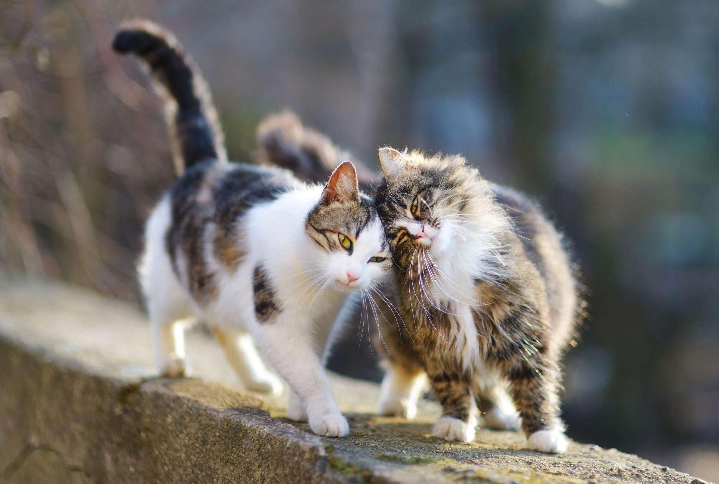 The Healing Power of the Cat Purr | Mental Floss
