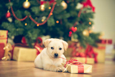 Treat your dog to something good this year.