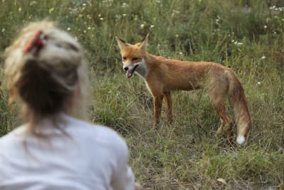 A fox near the Chernobyl power plant in 2017.