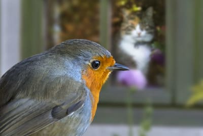 You'll need more than a well-placed house cat to keep birds from hitting your windows.