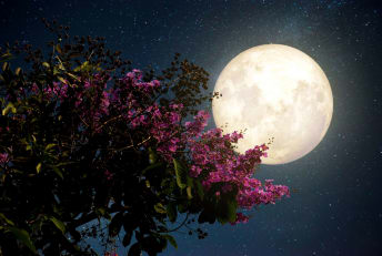 April's super pink moon will be extra big and bright (but still white).