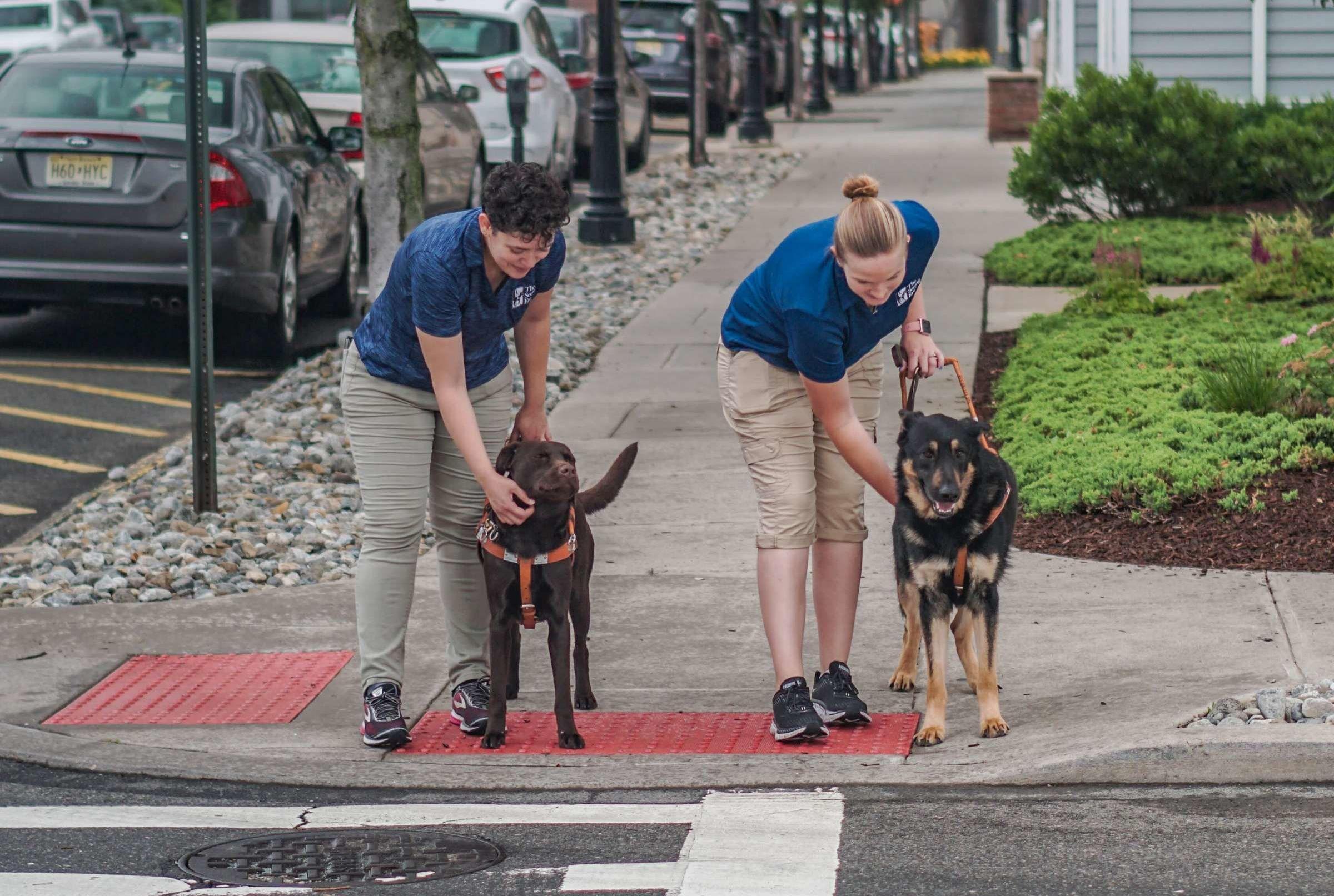 Seeing Eye Dog Trainer Secrets Mental Floss
