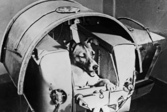 Laika, the first dog to go to space.