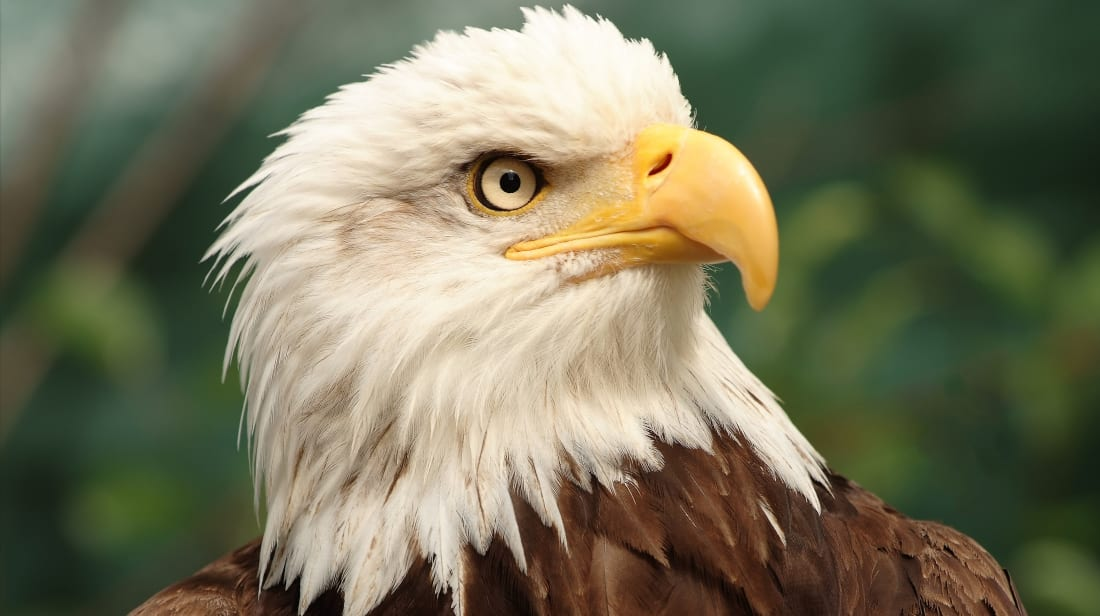14 Bold Facts About Bald Eagles | Mental Floss