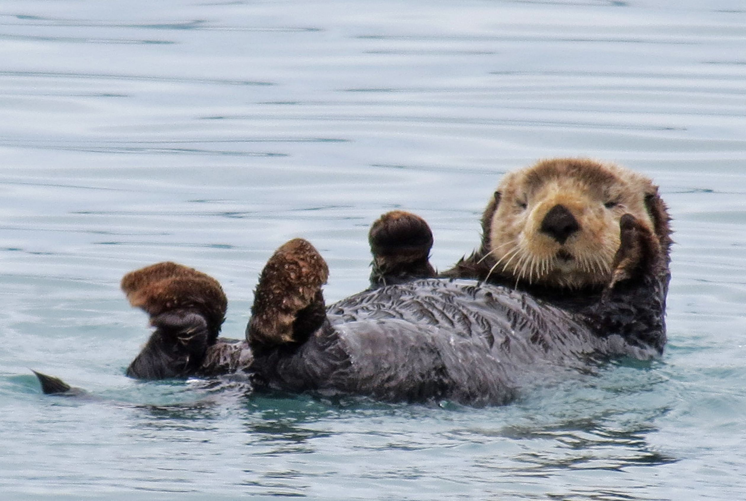 16 Playful Facts About Otters Mental