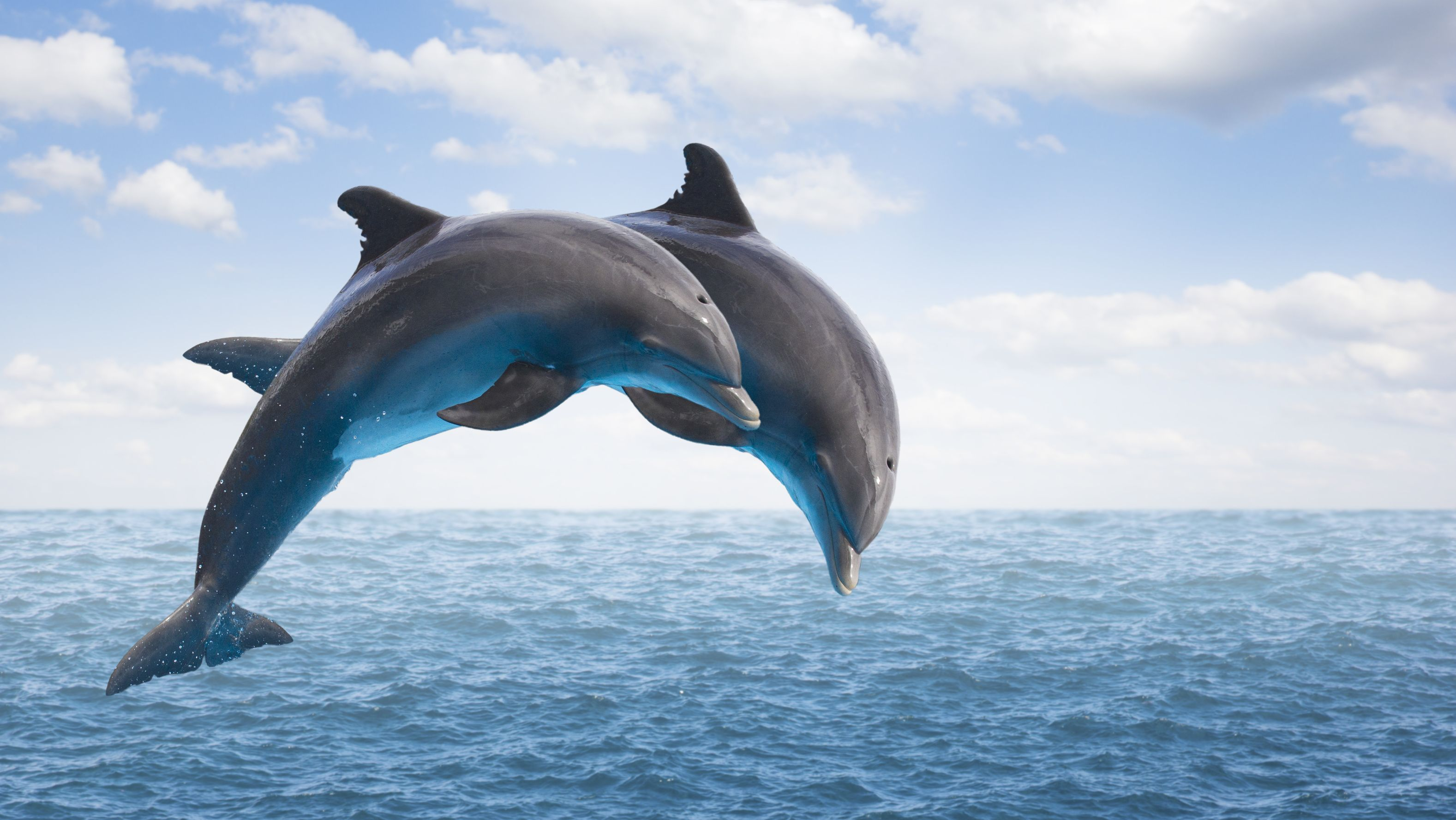 what tricks can dolphins do
