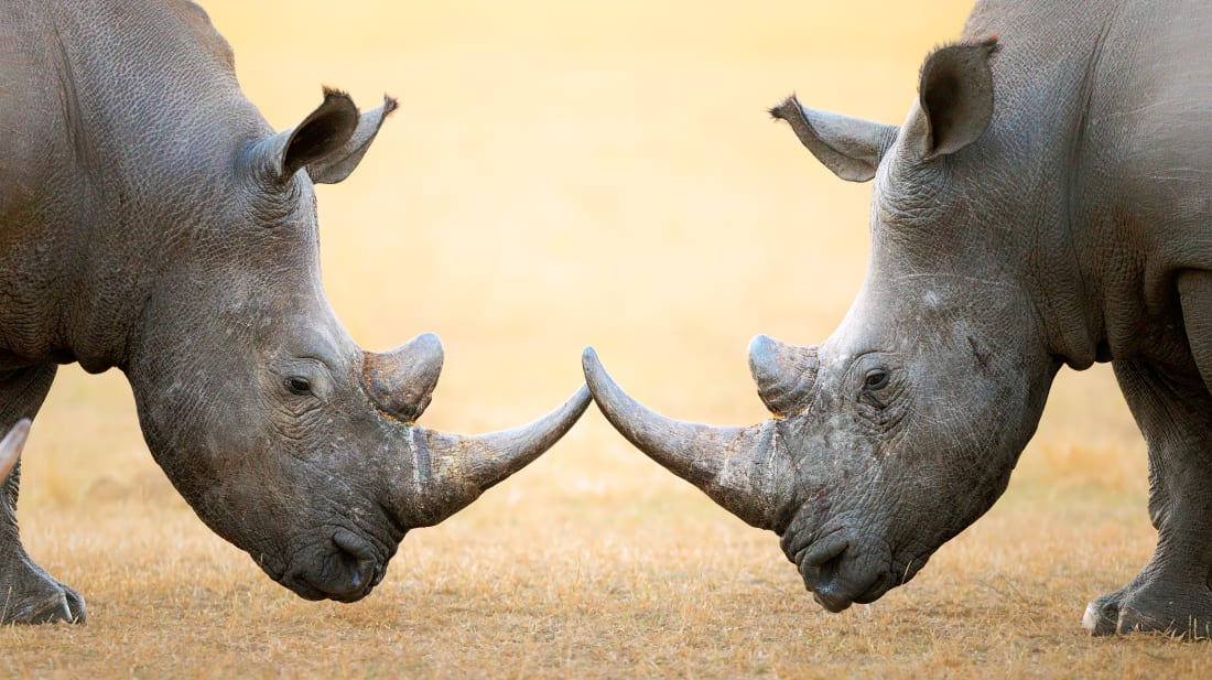 15 Things You Might Not Know About Rhinos | Mental Floss