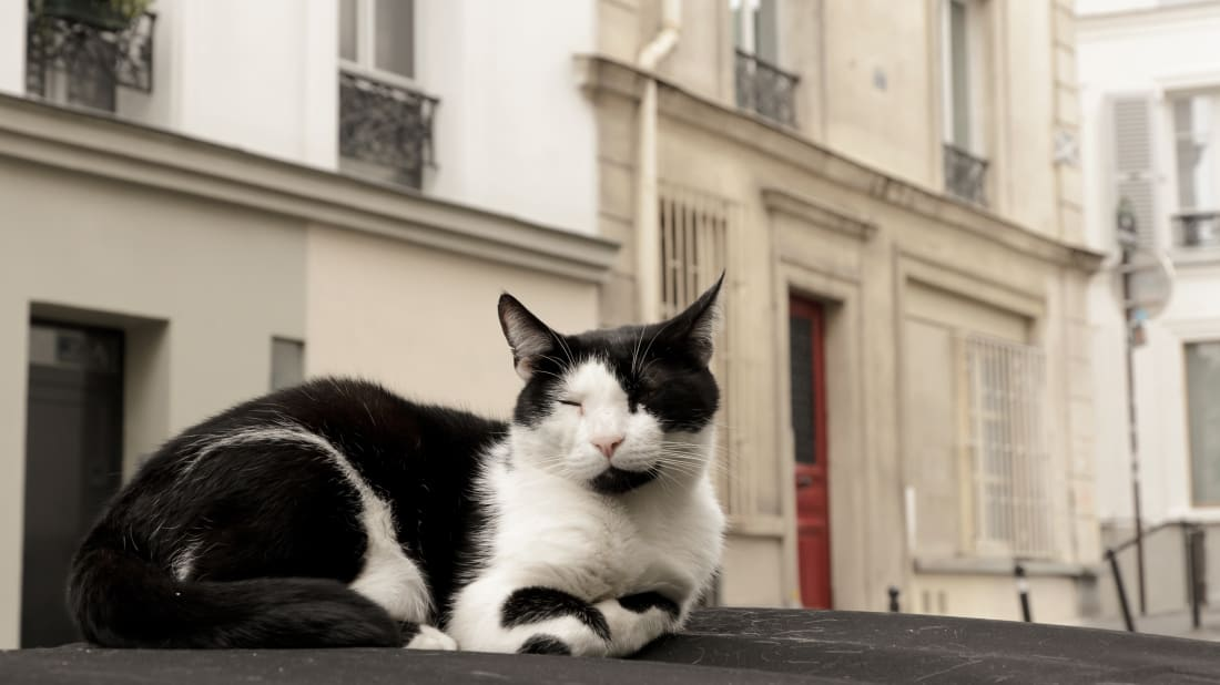 France Hires Two Cats to Get Rid of Rats in Government Offices
