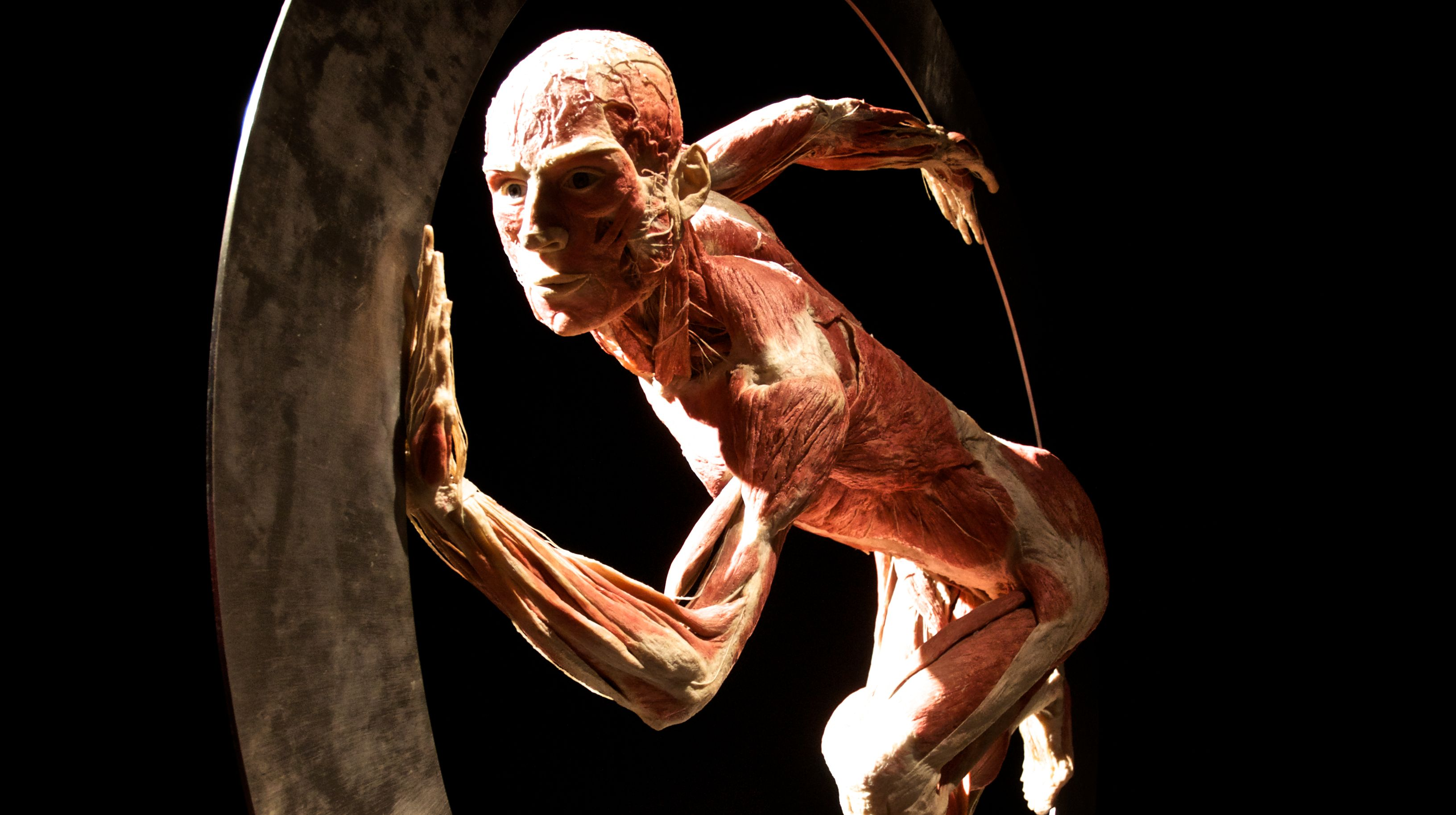 Human Body Images Art