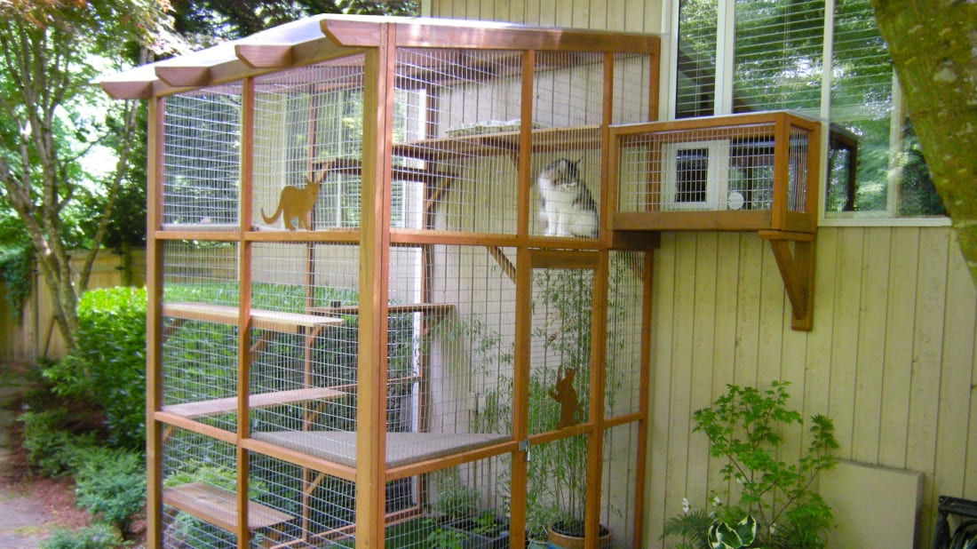 Catio Spaces