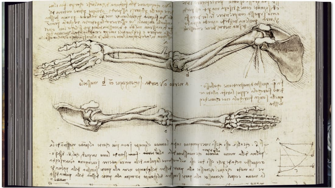 Explore Leonardo Da Vinci's Anatomical Sketches and Lesser