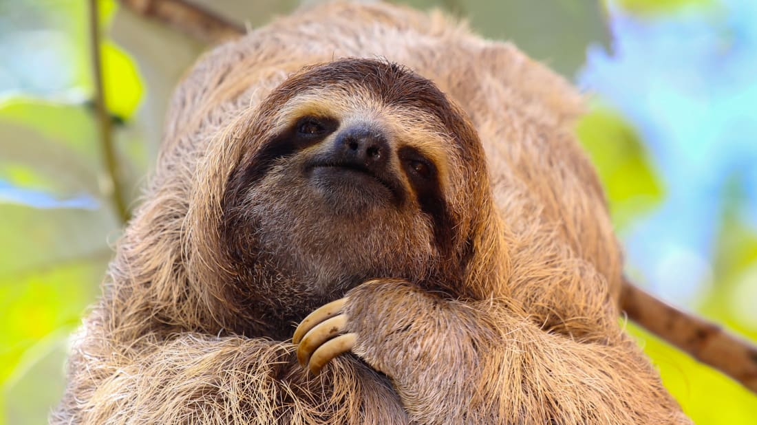 13 Chill Facts About Sloths | Mental Floss
