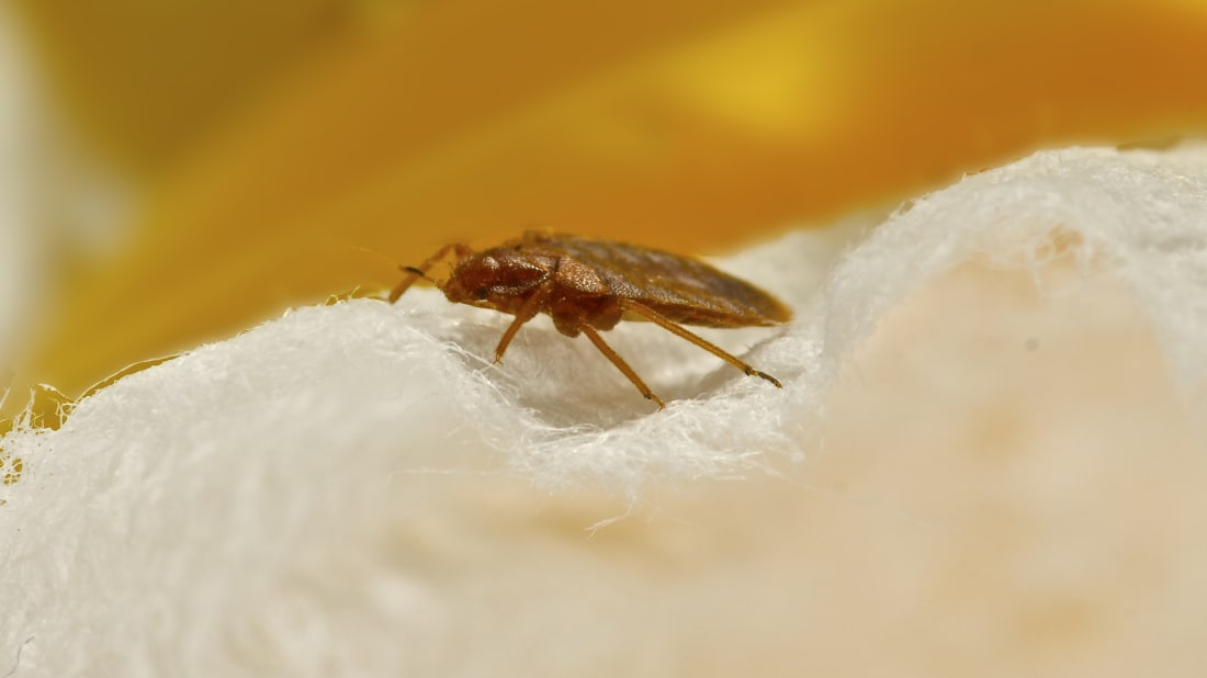 50 of America's Most Bed Bug-Infested Cities | Mental Floss