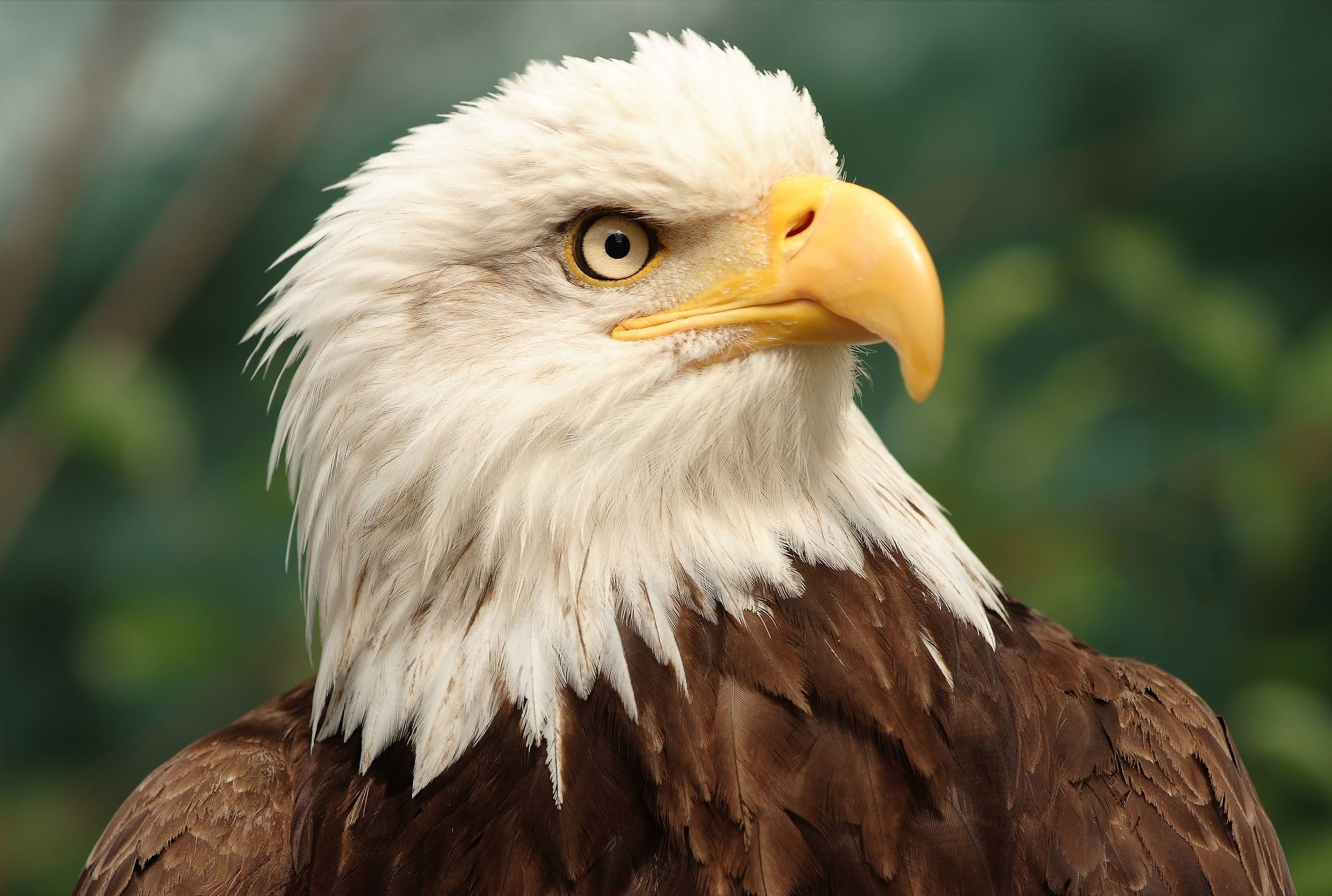 - 14 Bold Facts About Bald Eagles Mental Floss