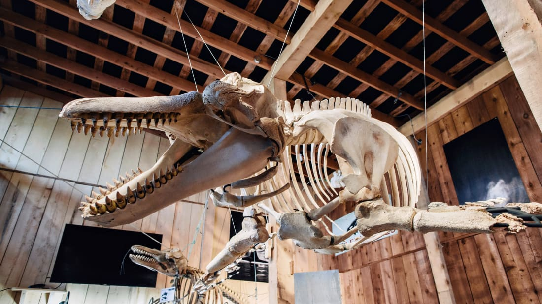 How Two Biologists Put A Killer Whale Back Together, Bone by Bone