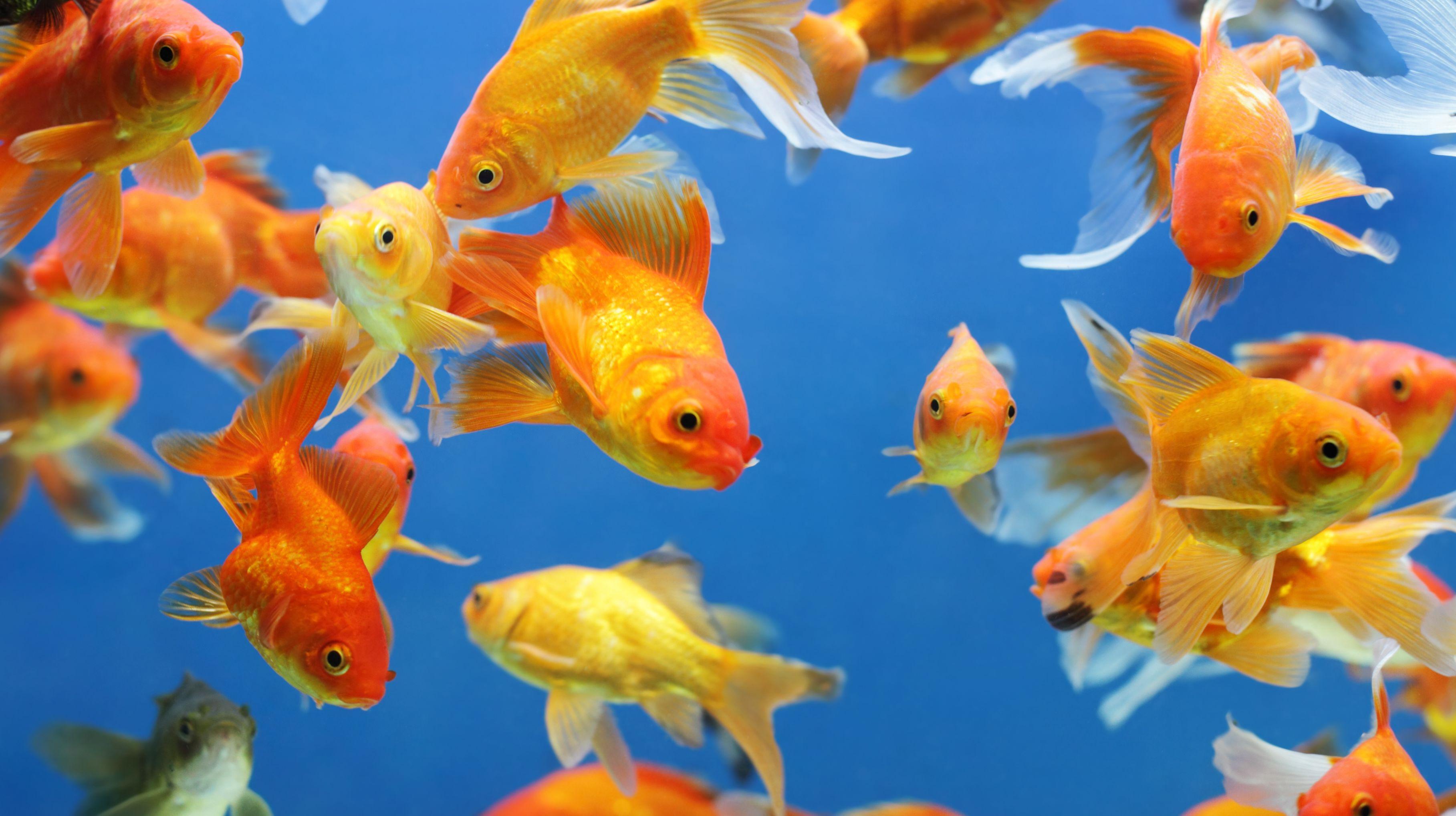 Картинки с аквариумными рыбками красивые его корневища