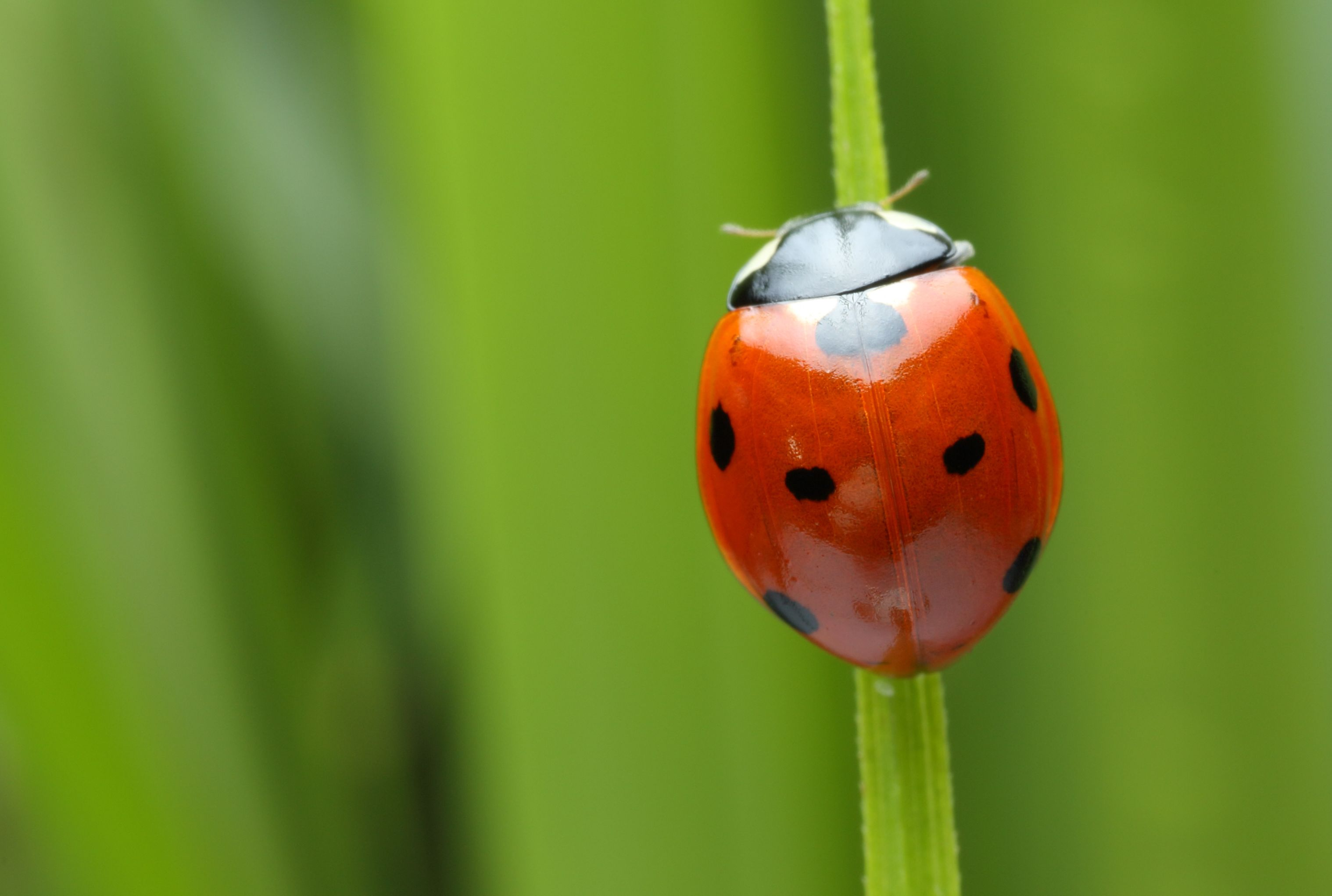 What S The Difference Between Bugs And Insects Mental Floss