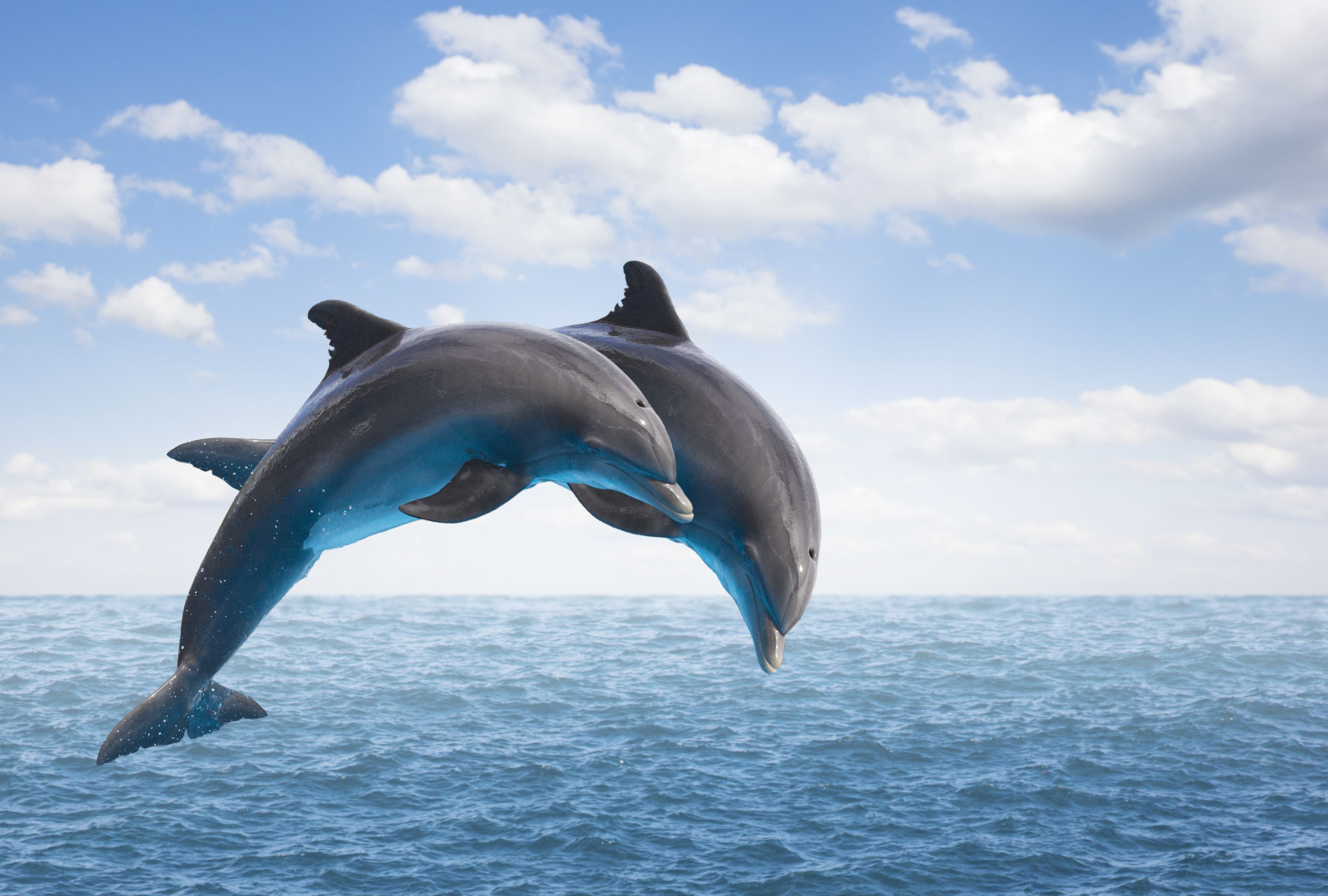 15 Delightful Facts about Dolphins | Mental Floss