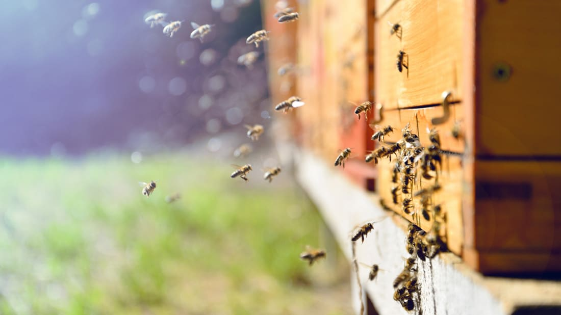 Amsterdam Hopes to Save Bee Populations With Its 'Insect Hotels'