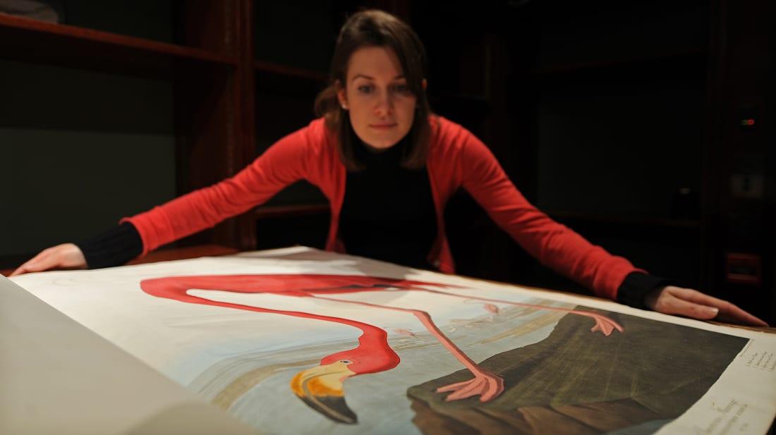 Audubon's 'Birds of America': The Book So Big It Needed Its