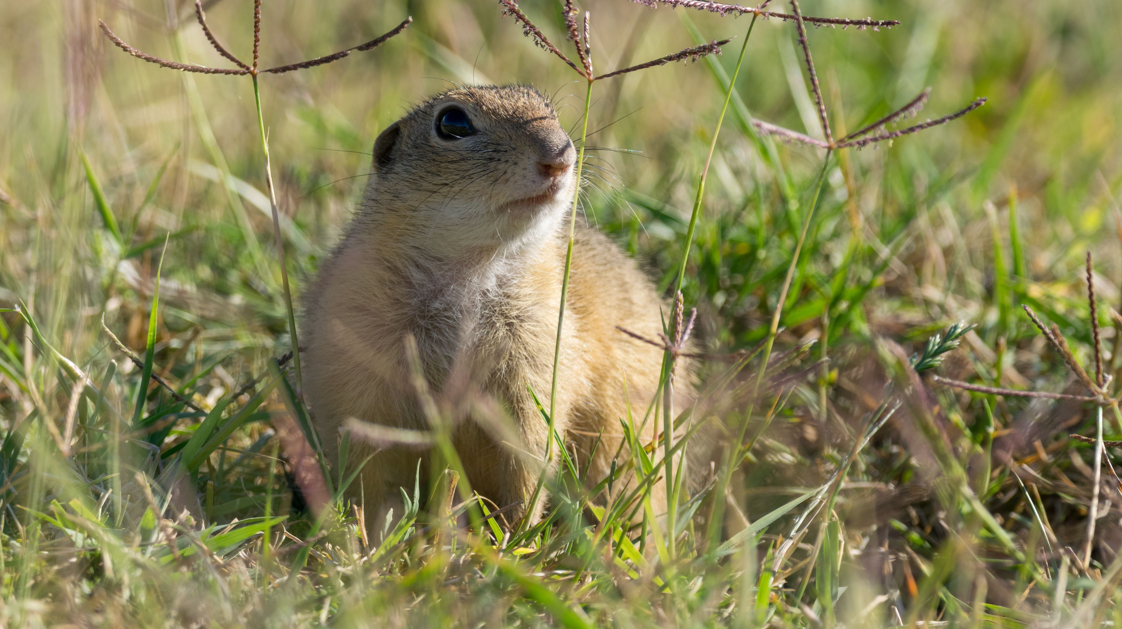 What's The Difference Between Gophers And Groundhogs
