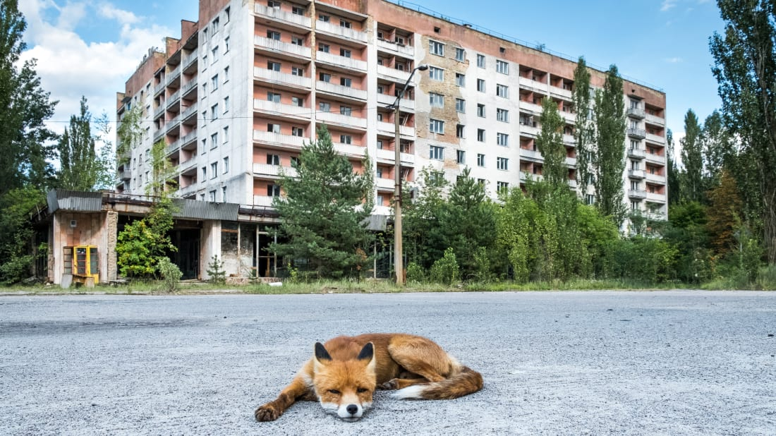 8 Facts About the Animals of Chernobyl